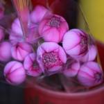 flower-market_17