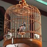 marche-oiseaux_04
