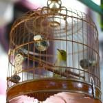 marche-oiseaux_05