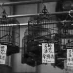 marche-oiseaux_08
