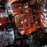 marche-oiseaux_10
