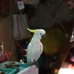 marche-oiseaux_14