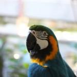 marche-oiseaux_15